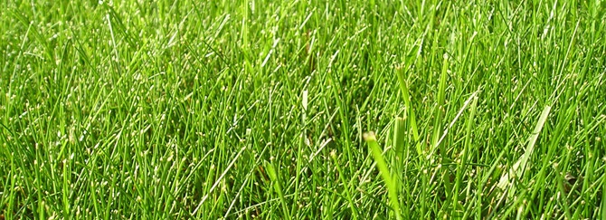 a perfect lawn in Fort Lauderdale Florida